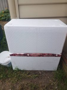 DIY worm farm made from polystyrene broccoli boxes.