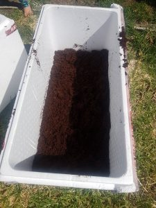 Prepare the worm bin with bedding material such as garden soil or aged compost.