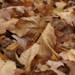 Add dry garden leaves into your worm bin.