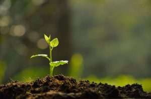 Worm castings help germinate new seedling by supplying extra nutrients and improving water absorption.