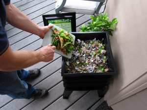 Starting a worm farm is a great way to recycle food waste.